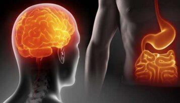 Intestino Cervello
