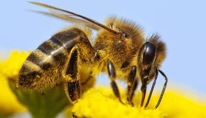 allergie, Allergie di primavera: come le affrontano uomini e donne