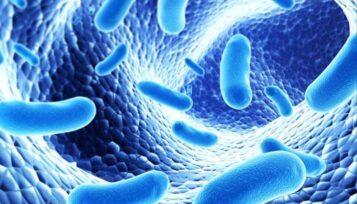 Batter Microbiota