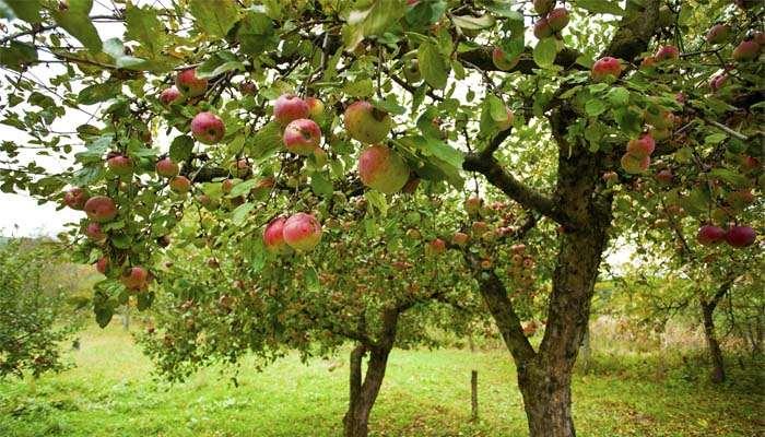 , Libri, il valore dell'acqua e la storia degli alberi da frutto