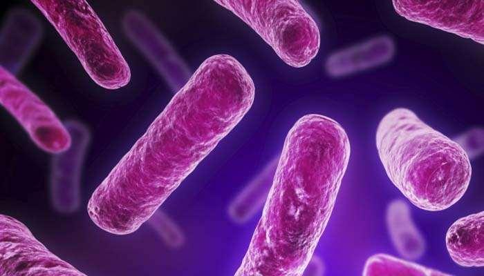 , Probiotici, ecco perché il loro utilizzo è efficace contro la stipsi