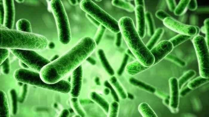 , Esiste una connessione tra PPI e microbiota intestinale?