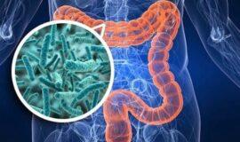 Microbiota Intestino