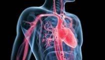 , Il microbiota intestinale influisce sull'invecchiamento delle arterie?
