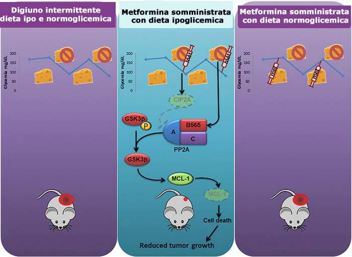 , Oncologia, la scoperta che apre la strada alla prevenzione delle metastasi