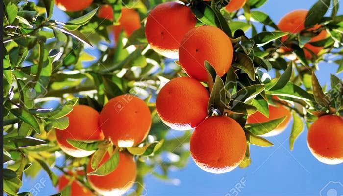 , Esperidina, antiossidante naturale più facile da assorbire della vitamina C